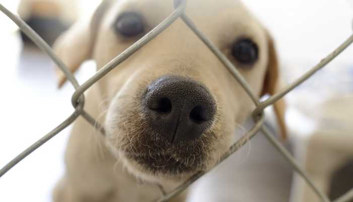 26-Step Checklist for Adopting a New Adult Dog or Puppy