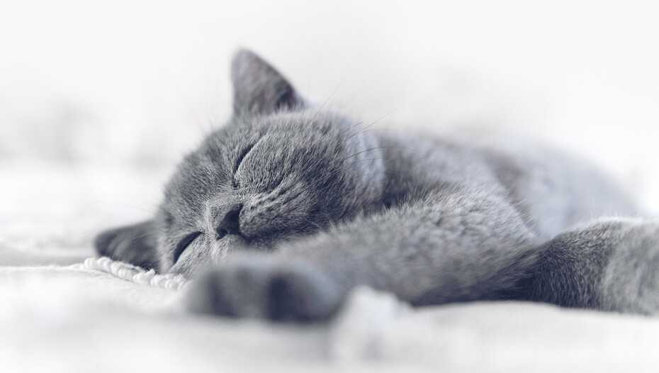 14 Fun Facts About Cats