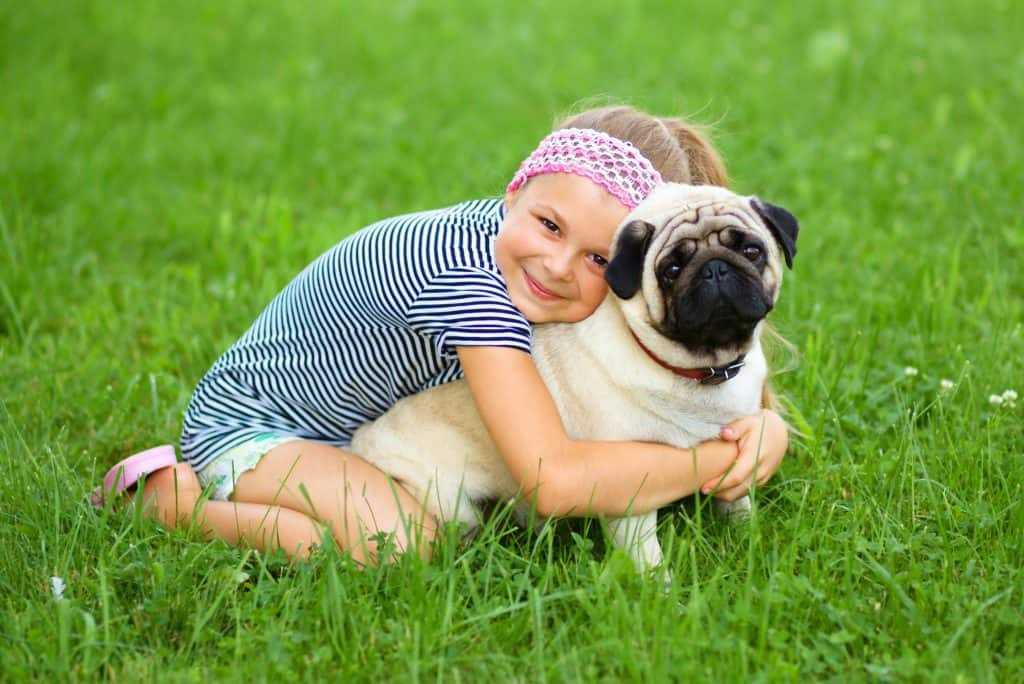 Pug Rescue Guide: How to Find One, and What it Will be Like