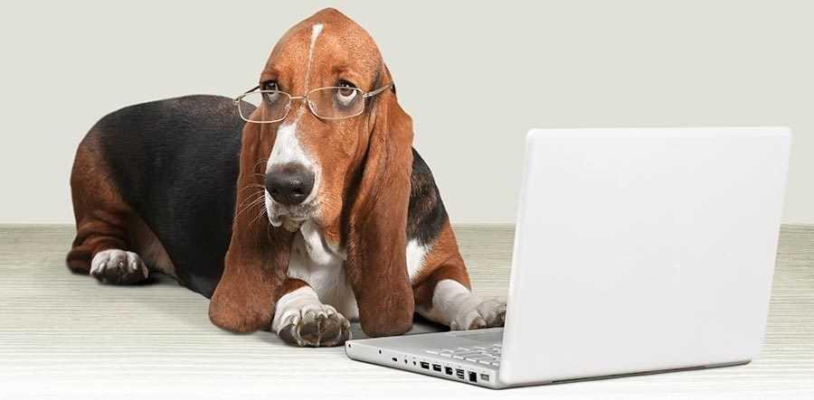 Adopting a Shelter Dog: Adoption Process