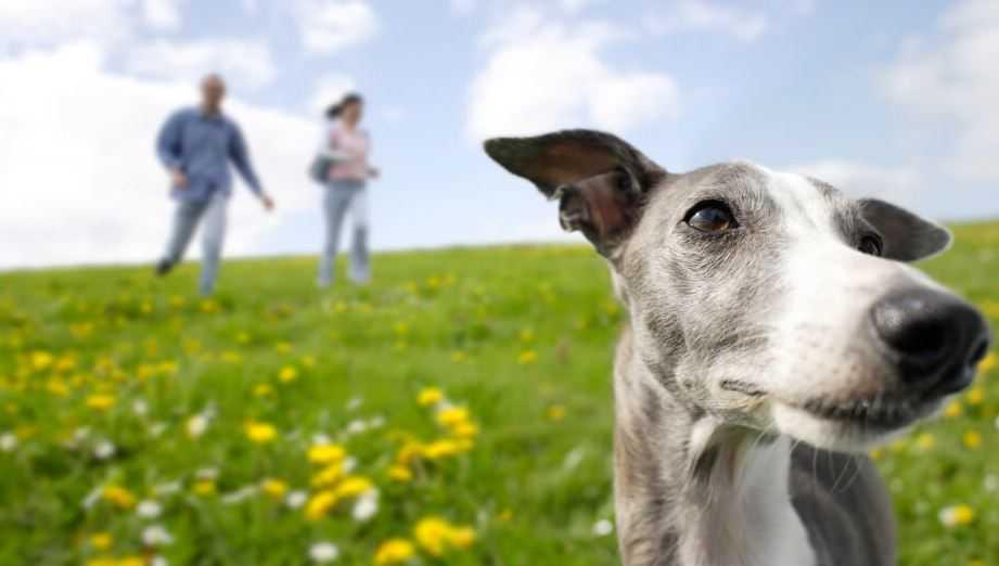 15 Amazing Dog Facts
