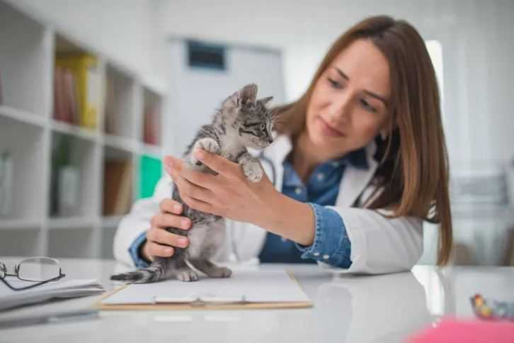 11 Expert Tips for Adopting a Cat