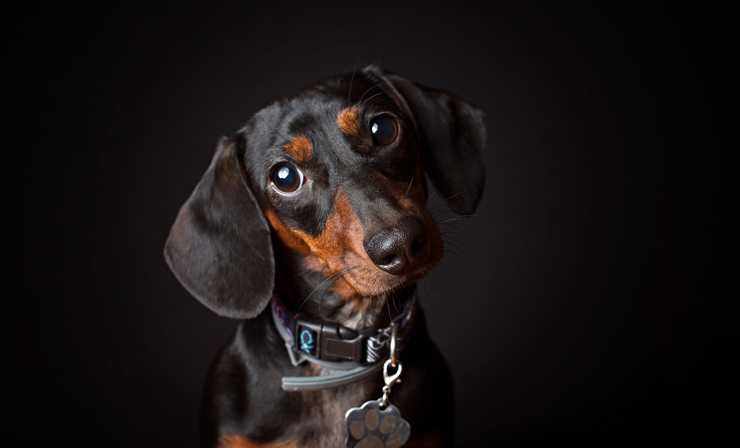 Top 10 Best Small Dog Breeds
