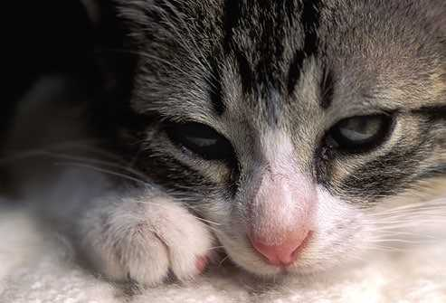 Taking Care of Kitten