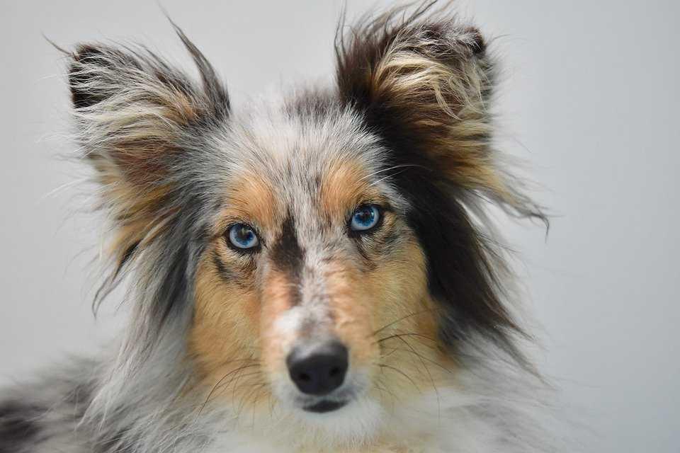 The Best 100 Female Dog Names