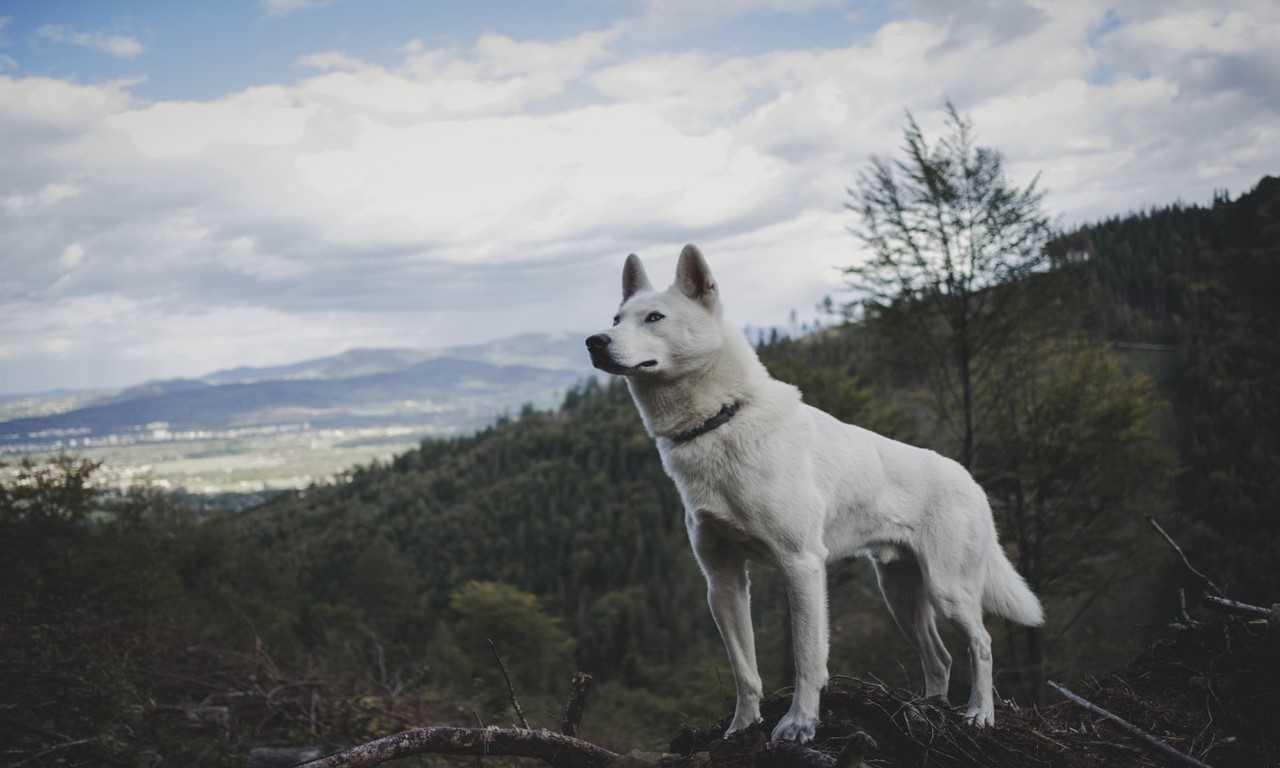 White Dog Names