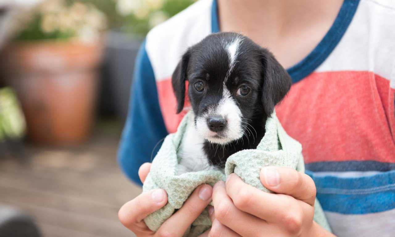 10 Questions to Ask Before You Adopt a Pet