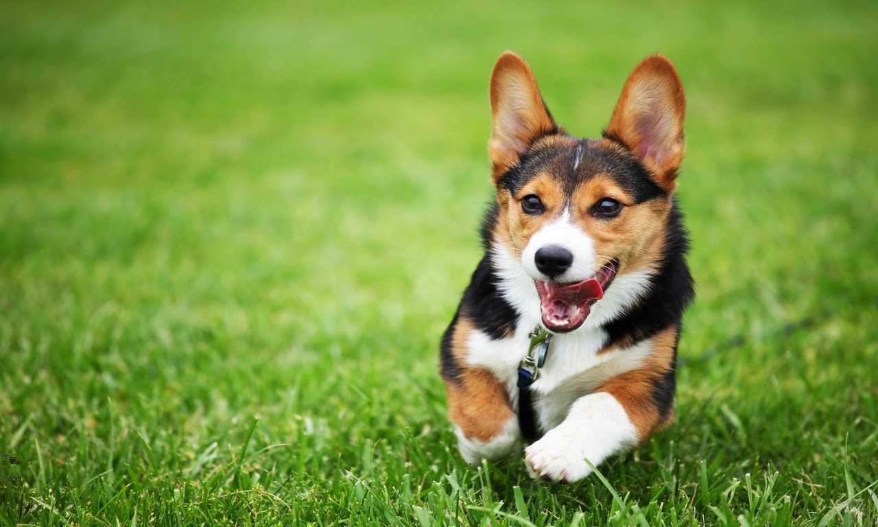 Find the Perfect Dog Name for the New Puppy in Your Life