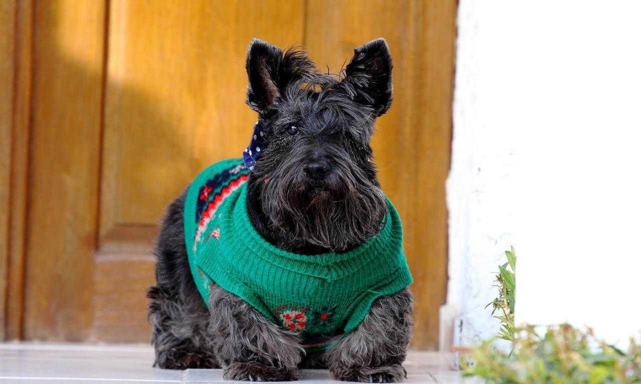 28 Scottish Dog Names
