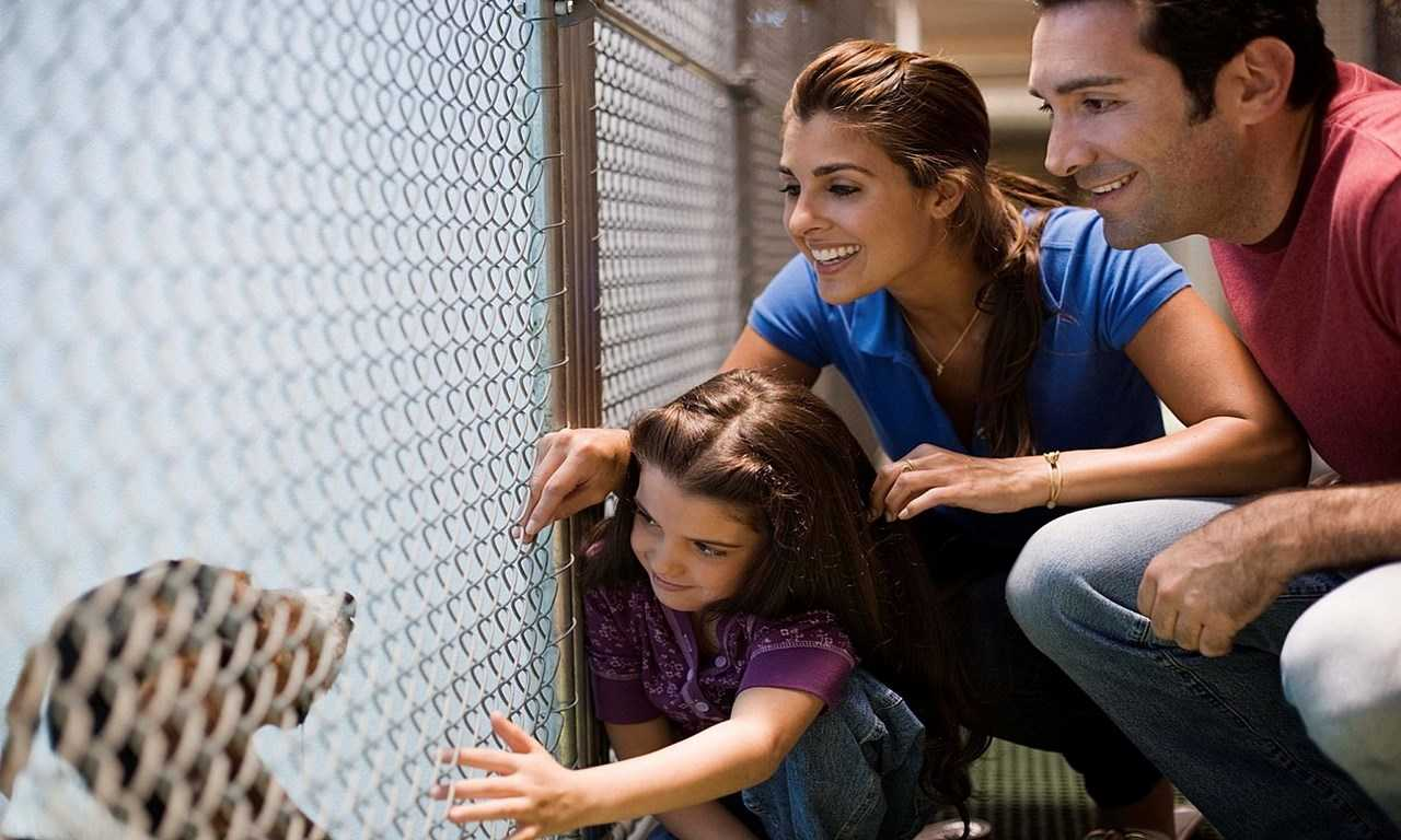 10 Tips for Being an Effective Foster