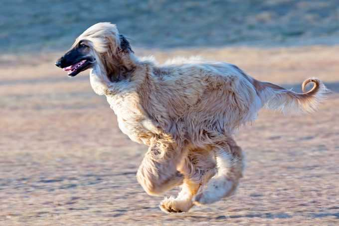 13 of the Fastest Dog Breeds in the World