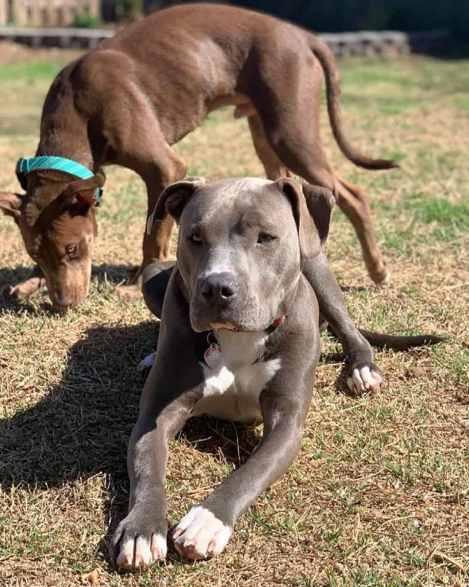 Colby Pitbull: Facts