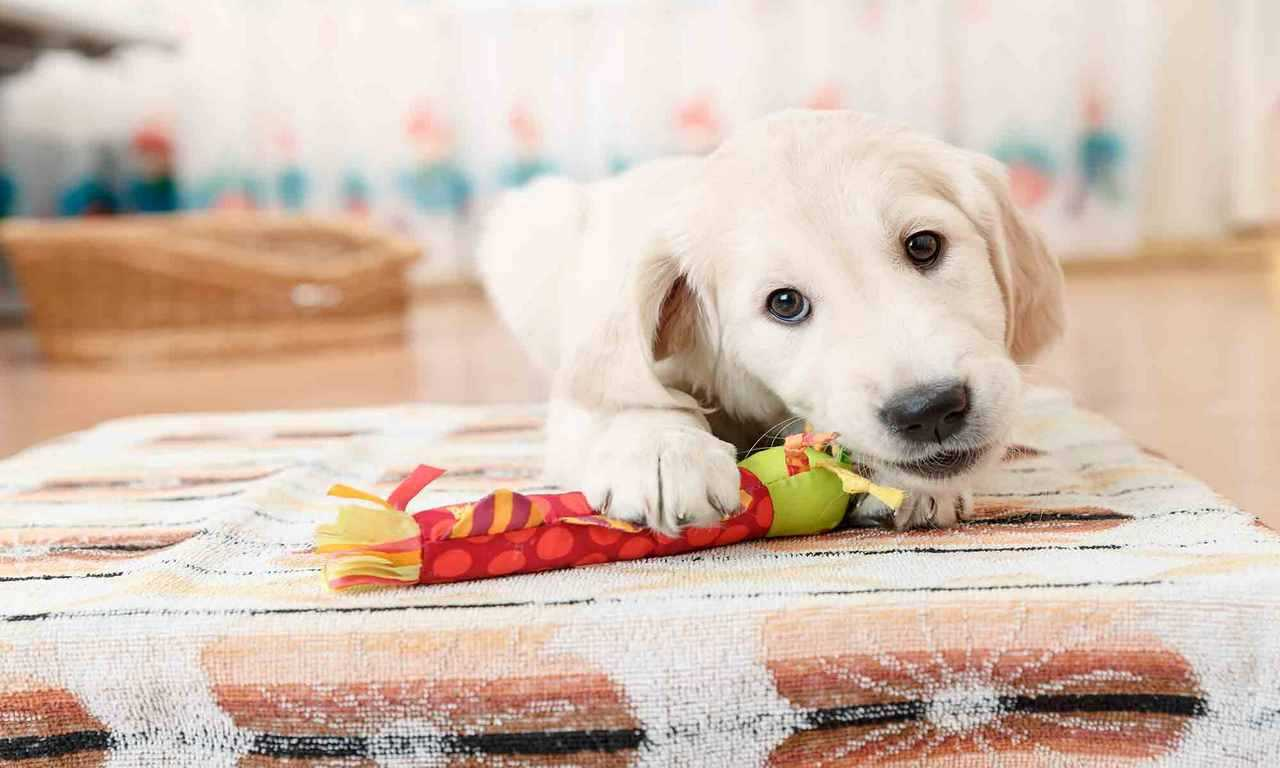 Adopting a High-Energy Dog