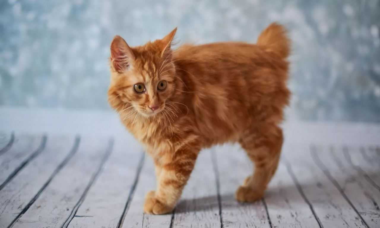 Facts About Ginger Cats