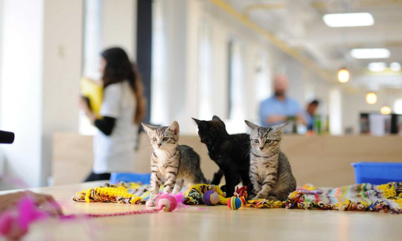 Tips for Adopting a Shelter Cat
