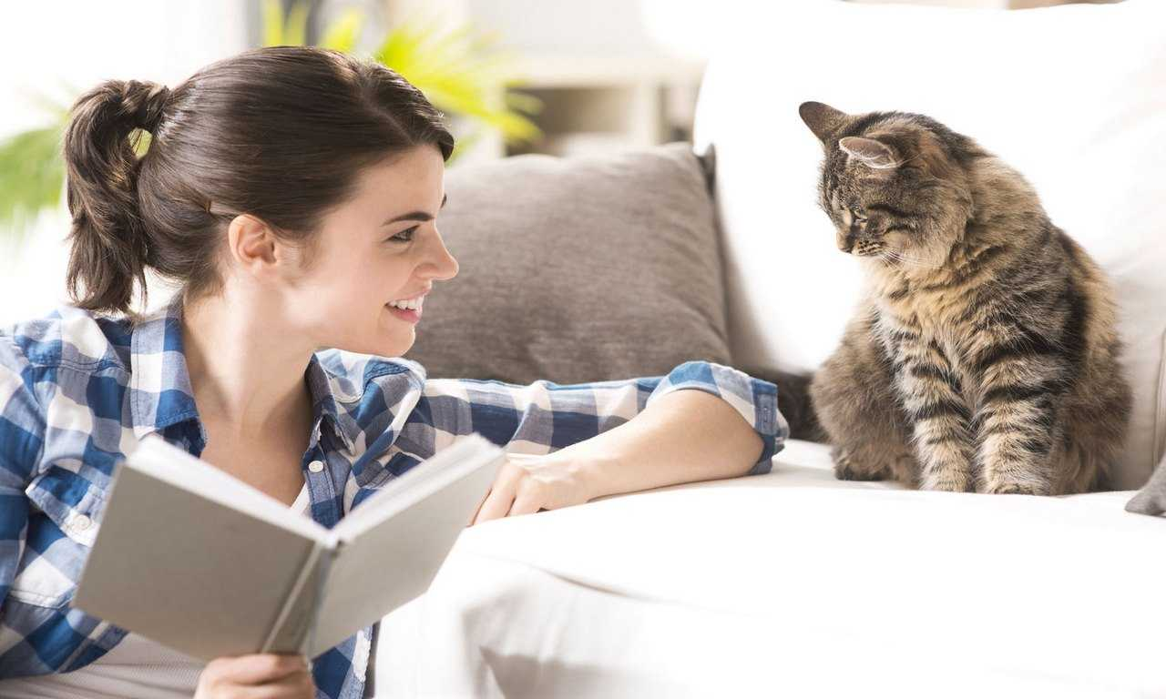 9 Tips for Adopting a Rescue Cat